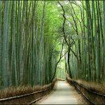 Podłoga bambusowa – wady i zalety
