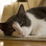 Czyszczenie dywanu z sierści