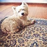 Jak poradzić sobie z plamą na dywanie?