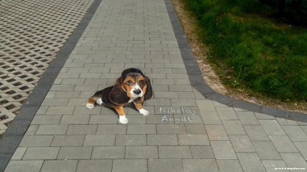 14-Nikolai_Arndt-baby-beagle